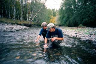 spawning gravel assessment