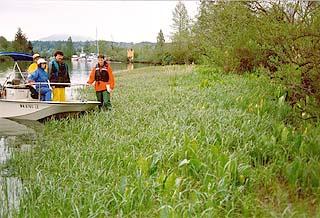 Snohomish River riparian