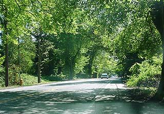 elms on Des Moines Memorial Drive