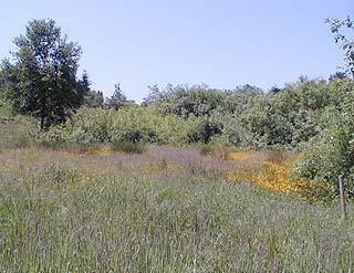 restored meadow