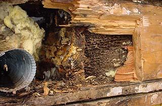 honeycombed wood