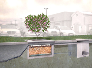Images Courtesy Of Filterra Bioretention Systems