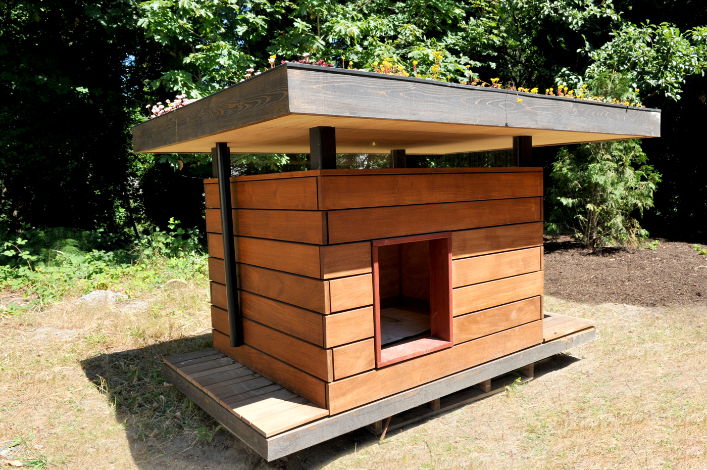 Home Design Ideas For Dogs: Seattle DJC.com Local Business News And Data